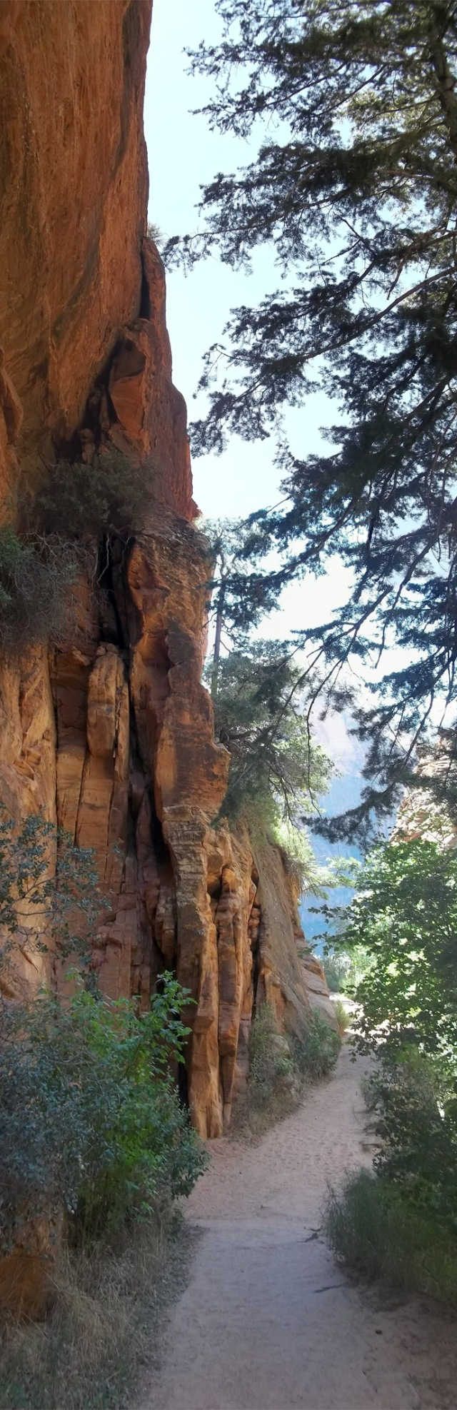 Zion_Return Tall